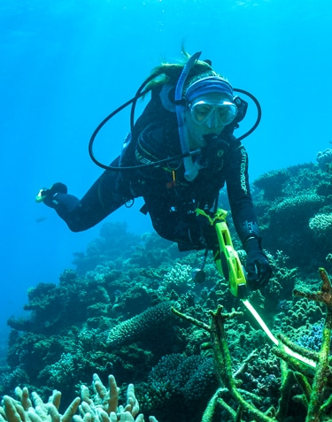 Reef rescue with the toughest corals